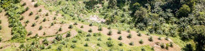 Engagement in de palmoliesector.