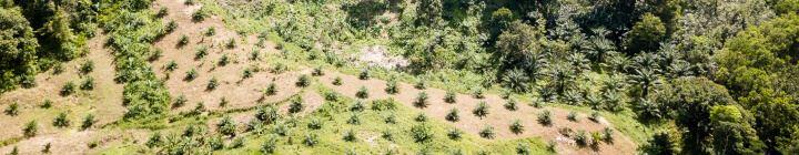 In gesprek met palmolieproducenten