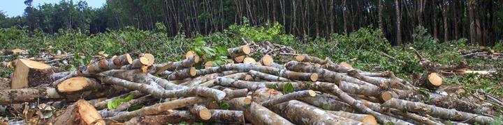 We gaan in gesprek om ontbossing tegen te gaan.