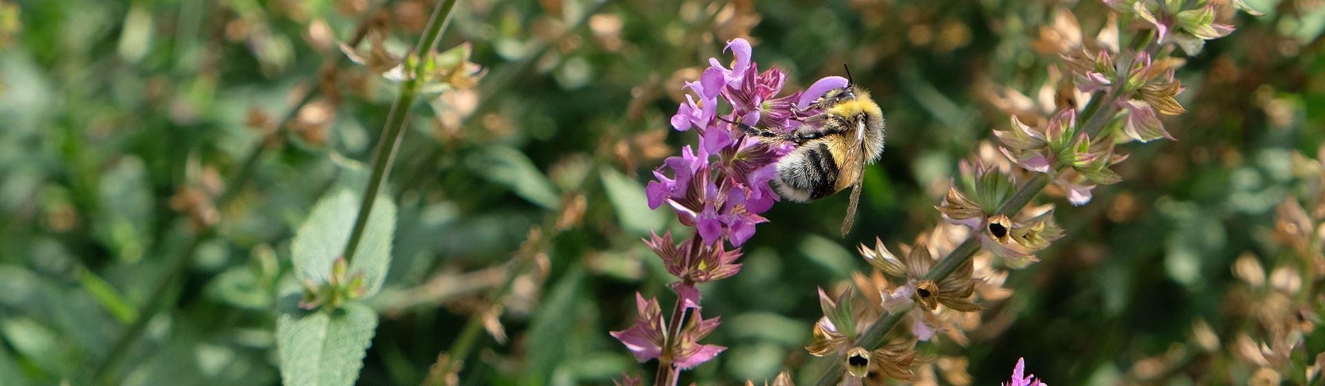 Bijenkolonies in de tuin van Zwitserleven.-second-banner