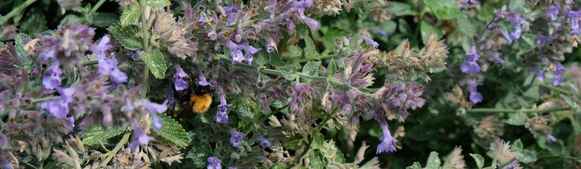 Bijenkolonies in de tuin van Zwitserleven.