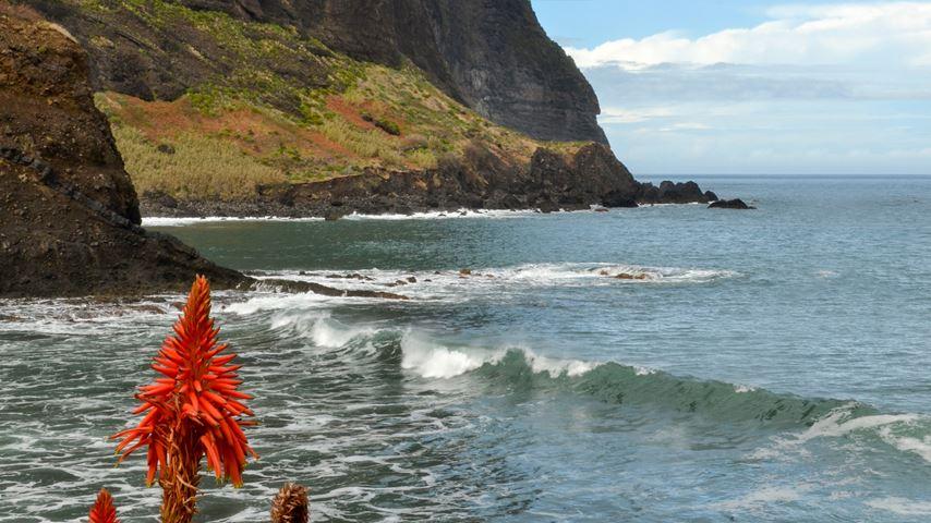 Porto Da Cruz, Madeira, Portugal. Rode bloem op de voorgrond. Zee en berg op de achtergrond.