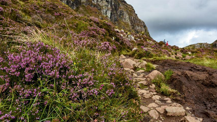 Isle of Skye, Schotland. Twee wandelaars lopen, in de verte, tussen paarse bloemen. Groene heuvels en grijze rotsen op de voorgrond.