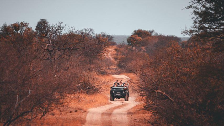 Krugerpark, Zuid-Afrika. Een jeep rijdt in de verte over een zandweg.