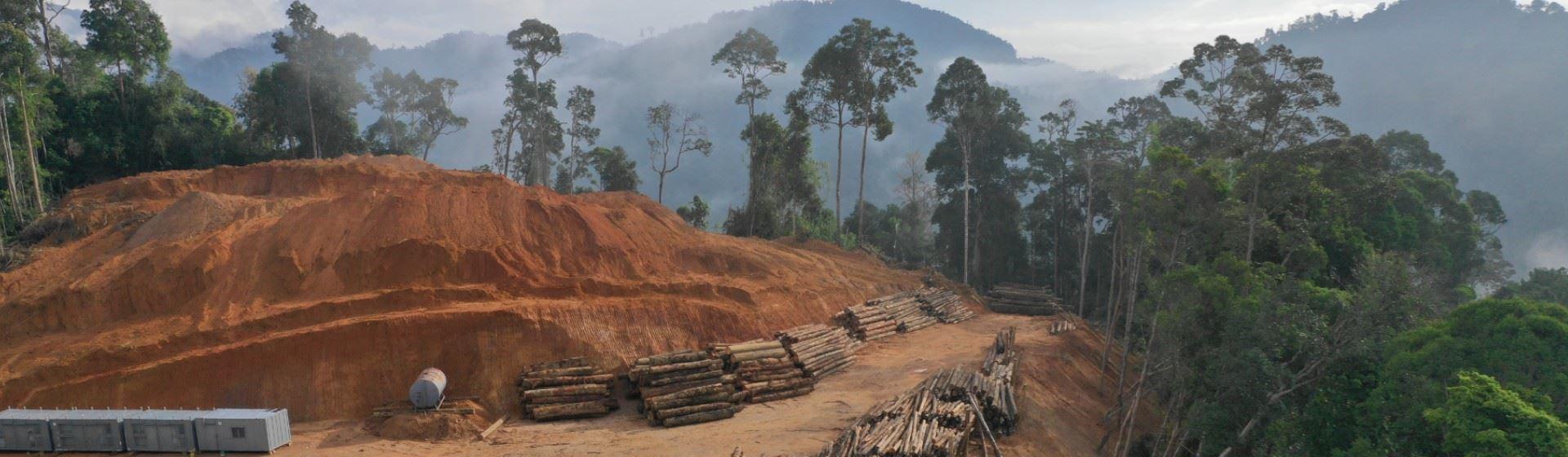 Brede coalitie van beleggers roept bedrijven op om ontbossing te stoppen.
