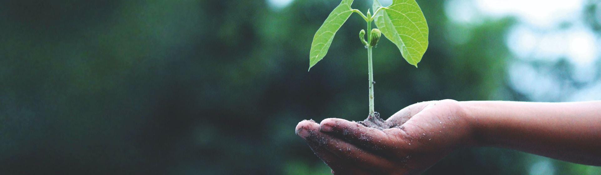 Zwitserleven verdubbelt donaties aan Trees for All