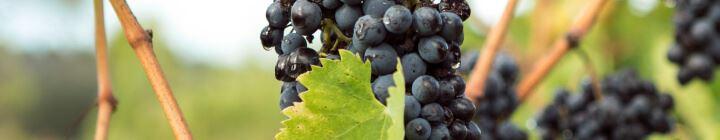 Korting op Italiaanse rode wijn